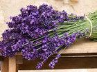 11 природных ароматов, которые изменят ваше настроение - ФОТО: Фоторепортажи
