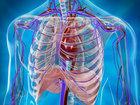 Бесполезные части человеческого тела - ФОТО: Фоторепортажи