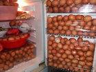 Любовь к яйцам довела китайца до преступления - ФОТО: Фоторепортажи