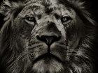 Проверь, какое животное соответствует типу твоего характера - ФОТО: Фоторепортажи