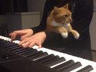 Ничто не остановит кота, если он захотел ласки - ВИДЕО: Видеоновости