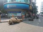 Китайские попрошайки отрезают верблюдам ноги ради милостыни - ФОТО: Фоторепортажи