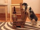 Толстый кролик научился приносить хозяину пиво - ВИДЕО: Видеоновости