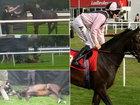 Убийство лучшей лошади Британии шокировало людей - ФОТО: Фоторепортажи