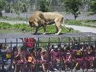 В Чили туристов бросают в логово львов - ФОТО - ВИДЕО: Фоторепортажи