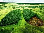 Что мы уничтожили на планете за последние 50 лет - ФОТО: Фоторепортажи