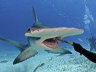 Белая акула напала на парня - ВИДЕО: Видеоновости