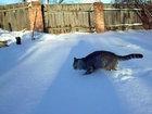 Кот не понимает, как он сюда попал - ВИДЕО: Видеоновости