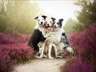 Самые красивые снимки собак, которые мы когда-либо видели - ФОТОСЕССИЯ: Фоторепортажи