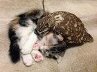 Неразлучные совенок и котенок - ФОТОСЕССИЯ: Фоторепортажи