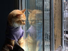 Спасение кошек: доброта и забота на улицах Лимы - ФОТОСЕССИЯ: Фоторепортажи