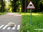 Крошечные дорожные знаки для крошечных жителей Вильнюса - ФОТОСЕССИЯ: Фоторепортажи