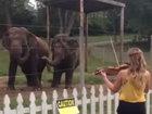Слоны станцевали под музыку Баха - ФОТО - ВИДЕО: Фоторепортажи