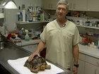 Содержимое кишечника этой черепахи вызвало шок - ФОТО: Фоторепортажи