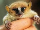 Животные, о которых вы раньше не слышали - ФОТОСЕССИЯ: Фоторепортажи