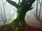 Мистический лес Страны басков - ФОТОСЕССИЯ: Фоторепортажи