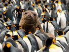 Фотографии животных за неделю - ФОТОСЕССИЯ: Фоторепортажи