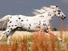 15 лошадей, от красоты которых перехватывает дыхание - ФОТОСЕССИЯ: Фоторепортажи