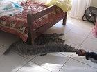 Сюрприз на утро: мужчина проспал с крокодилом всю ночь - ФОТО: Это интересно
