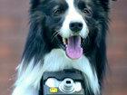 Что снял первый в мире пес-фотограф? - ФОТОСЕССИЯ: Фоторепортажи