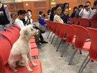 Студенты испытали шок, увидев, что стало с их собакой-талисманом - ФОТО: Фоторепортажи