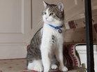 Неизвестная украла у москвички кота и требует выкуп: Это интересно