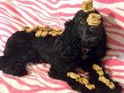 Белла Бу - самая талантливая собака в мире - ФОТОСЕССИЯ: Фоторепортажи