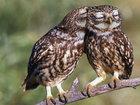 20 фотографий, которыми совы могут гордиться - ФОТОСЕССИЯ: Фоторепортажи