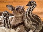 Эти ласкающиеся страусята и кенгуренок заставят вас растаять от умиления - ФОТОСЕССИЯ: Фоторепортажи