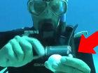 Что будет, если разбить яйцо под водой - ВИДЕО : Видеоновости