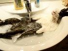15 купающихся зверей, которые обязательно заставят вас улыбнуться - ФОТОСЕССИЯ: Фоторепортажи