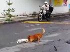 """Душераздирающая сцена: пес пытается """"оживить"""" умершего друга - ФОТО - ВИДЕО: Фоторепортажи"""