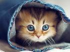 11 способов использования котов в хозяйстве - ФОТОСЕССИЯ: Фоторепортажи