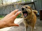 Как действовать, если напала собака - ФОТОСЕССИЯ: Фоторепортажи