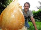 Британский садовник вырастил самую тяжелую в мире луковицу - ФОТО: Фоторепортажи