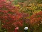 Невероятные краски осени - ФОТОСЕССИЯ: Фоторепортажи