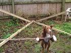 Невероятный пес-экстремал - ВИДЕО: Видеоновости