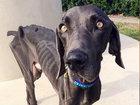 В США ветеринары спасли пса-анорексика - ФОТО: Фоторепортажи