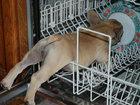 20 необычных мест, где может уснуть ваша собака - ФОТОСЕССИЯ: Фоторепортажи