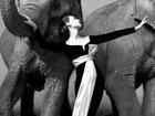 Самые дорогие фотографии в истории - ФОТОСЕССИЯ: Фоторепортажи