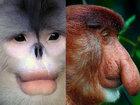 Смешные носатики в природе - ФОТОСЕССИЯ: Фоторепортажи