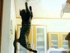 Прыжки кота в замедленной съемке - ВИДЕО: Видеоновости