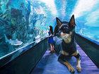 Реалистичные рисунки гигантского пса и симпатичной кореяночки - ФОТОСЕССИЯ: Фоторепортажи