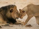 Животные в фотографиях - ФОТОСЕССИЯ: Фоторепортажи