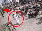Камеры засняли ошеломляющее зрелище - ВИДЕО: Видеоновости
