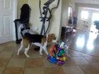 Забавно: щенок помогает ребенку - ВИДЕО: Видеоновости