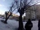 Оказывается, дерево может спасти жизнь - ВИДЕО: Видеоновости