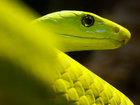 Лучшие фотографии животных со всего мира за неделю - ФОТОСЕССИЯ: Фоторепортажи