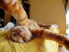 Коты делали селфи задолго до того, как это стало мейнстримом - ФОТОСЕССИЯ: Фоторепортажи