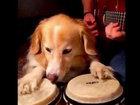 Собака с хозяином исполняет 10 известных песен - ВИДЕО: Видеоновости